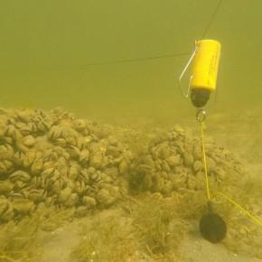 Poseidon Multifunction Back Lead 100 g